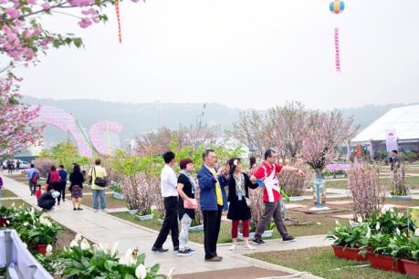 Hấp dẫn lễ hội hoa Anh đào - Mai vàng Yên Tử 2017