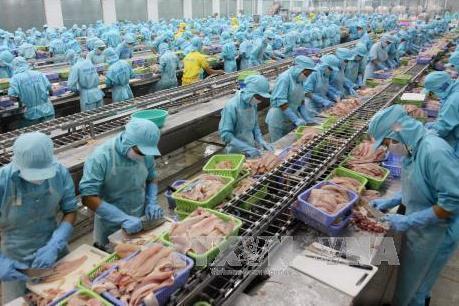 Cá tra Việt và cuộc chiến giữ hình ảnh ở thị trường EU