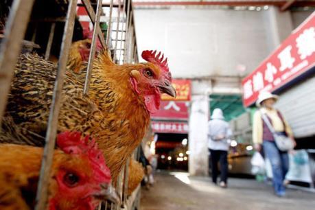 Những điều cần biết về bệnh cúm A/H7N9 và một số biện pháp phòng tránh