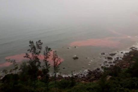 Hé lộ nguyên nhân vệt nước màu đỏ ở vùng biển Chân Mây - Lăng Cô
