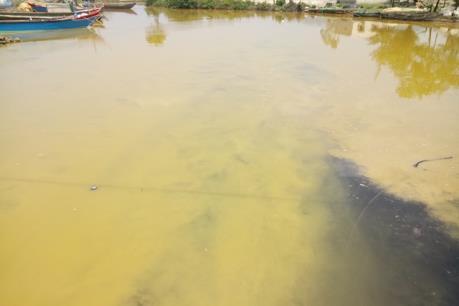 Đã tìm ra nguyên nhân khiến nước biển ở Lăng Cô chuyển sang màu vàng