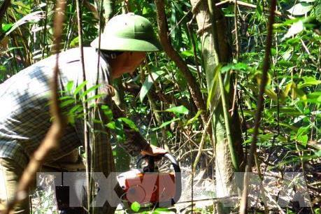 Thanh tra việc thực hiện chuyển đổi mục đích sử dụng rừng tại Phú Yên