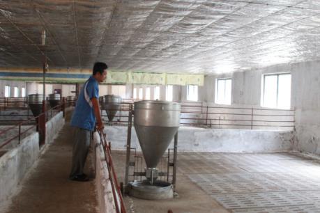 """Nhiều hộ chăn nuôi lợn ở Đồng Nai """"treo chuồng"""" vì giá xuống thấp"""
