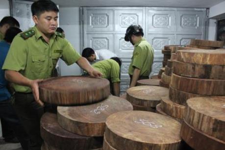 Bắt giữ một vụ gỗ nghiến được sơ chế dạng thớt lớn nhất từ trước đến nay