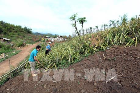 Điện Biên gỡ vướng trong giải quyết tình trạng phá rừng và di cư tự do ở Mường Nhé