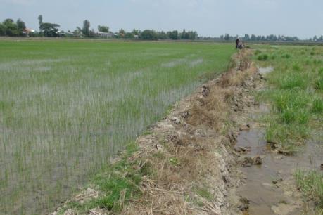 Bảo vệ tài nguyên đất: Chấn chỉnh tình trạng bán đất mặt ruộng