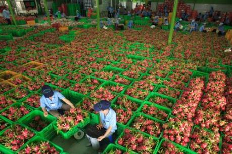 Nông dân và doanh nghiệp khó tiếp cận vốn vay