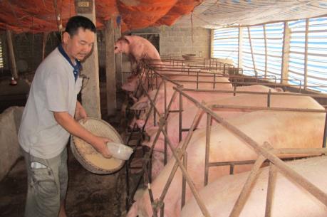 Đồng Nai ưu tiên tiêu thụ thịt lợn, tăng cường xử lý giết mổ trái phép