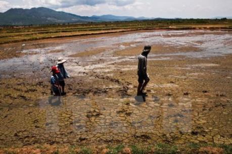 Một số giải pháp ứng phó với biến đổi khí hậu ở Việt Nam