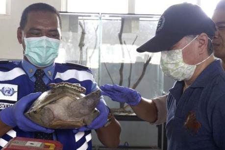 Indonesia bắt giữ một người Nhật Bản vận chuyển trái phép động vật hoang dã