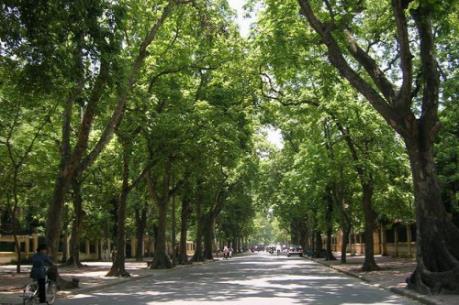 Sở Xây dựng Hà Nội nói gì về thông tin thay thế 4.000 cây xà cừ?