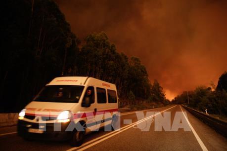 Bồ Đào Nha: Ít nhất 62 người thiệt mạng do cháy rừng