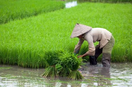 Nông nghiệp Trung Quốc mất dần thị phần