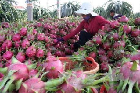 Đâu là thị trường nhập khẩu hàng đầu rau quả Việt Nam?