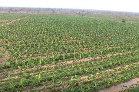 Nông nghiệp công nghệ cao: 'Mở khóa' giá trị vùng đất khó
