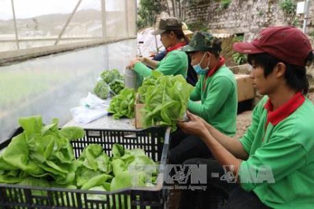 Trung Quốc, Nhật, Mỹ và Hàn Quốc là 4 thị trường nhập khẩu rau quả hàng đầu