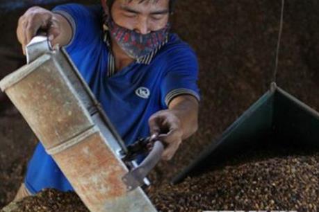 Đắk Lắk hỗ trợ các doanh nghiệp nâng công suất cơ sở chế biến cà phê sâu