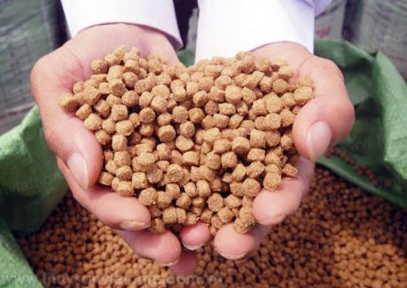 Phát hiện nhiều cơ sở kinh doanh thức ăn chăn nuôi thuỷ sản giả