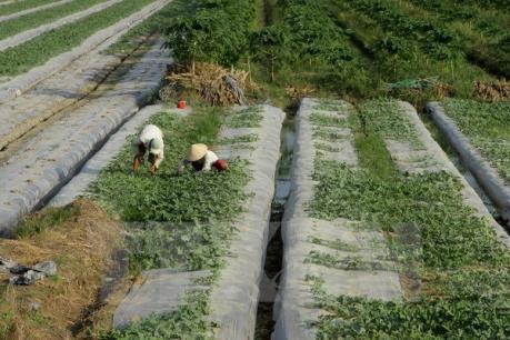 Cà Mau mời gọi đầu tư vùng nông nghiệp ứng dụng công nghệ cao