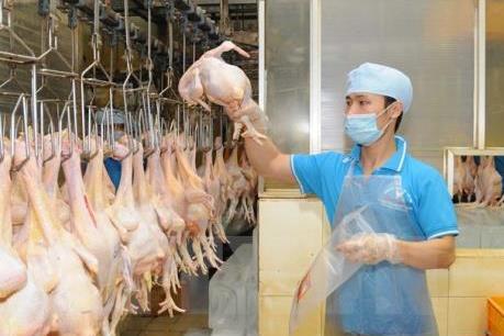 Nhân rộng cơ sở an toàn dịch bệnh để đáp ứng thị trường trong nước và xuất khẩu