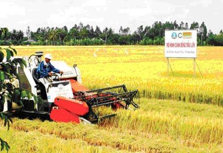 Phát triển cánh đồng lúa mẫu lớn giúp tăng thu nhập cho nông dân