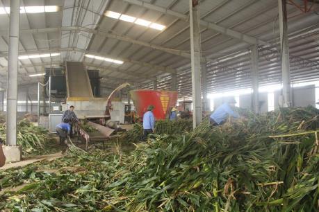 Chuỗi cung ứng thực phẩm an toàn đến tay người tiêu dùng