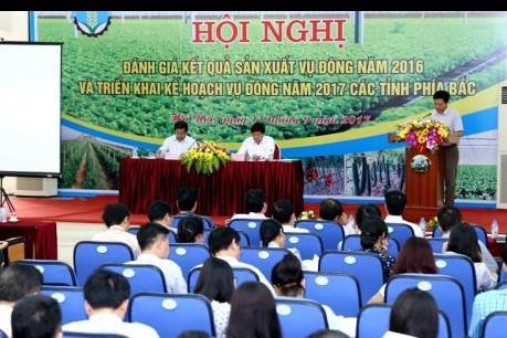 Vụ Đông 2017 đặt mục tiêu sản xuất 410.000 ha