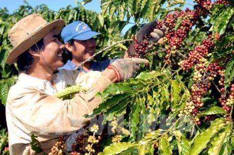 Xuất khẩu của Việt Nam sang Algeria tăng cao