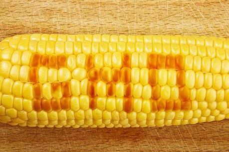 Tòa án châu Âu phủ quyết lệnh cấm của Italy với giống ngô MON 810 của Monsanto