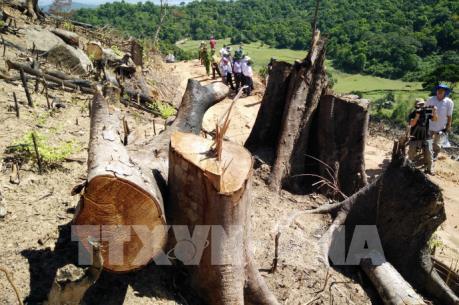 Tin mới nhất về vụ phá 43,7 ha rừng tự nhiên ở Bình Định