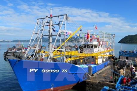 Bão số 10: Phú Yên hướng dẫn các tàu thuyền vào nơi tránh trú an toàn