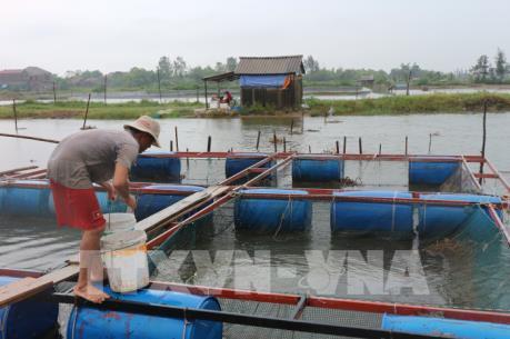 Ứng phó bão số 10: Hà Tĩnh thu hoạch thủy sản sớm