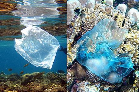 """Phát hiện """"đảo"""" rác nilon khổng lồ ở Nam Thái Bình Dương"""
