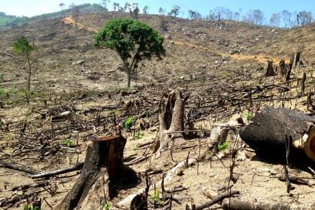 Vụ phá 61 ha rừng tại Bình Định: Yêu cầu đình chỉ công tác 2 cán bộ kiểm lâm