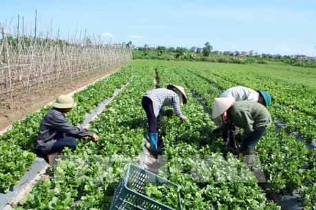 """Cơ cấu lại ngành nông nghiệp - Bài cuối: Tháo gỡ các """"điểm nghẽn"""""""