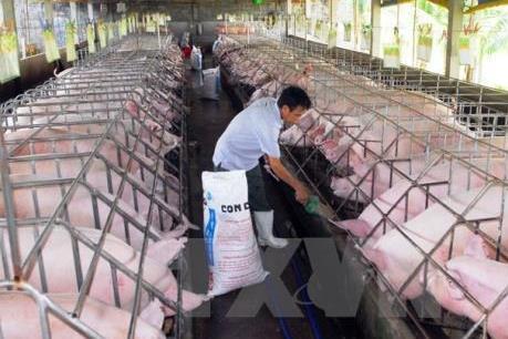 Tập đoàn Olmix khánh thành nhà máy sản xuất phụ gia thức ăn chăn nuôi