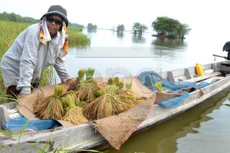 Thái Lan thông qua gói biện pháp hỗ trợ gạo