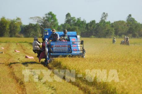 Thúc đẩy chuỗi giá trị lúa gạo chất lượng cao