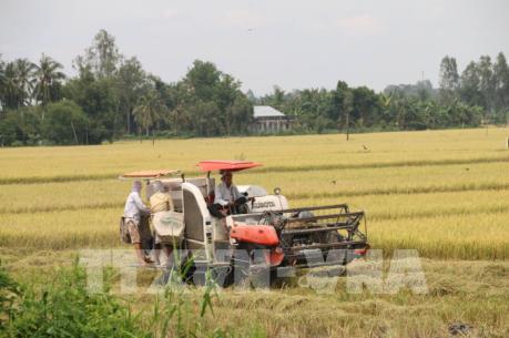 Các địa phương khẩn trương xuống giống vụ lúa Hè Thu