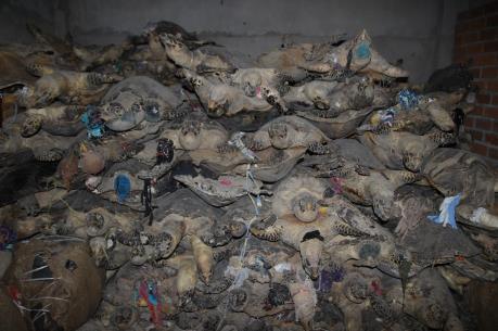 """""""Núp bóng"""" quán thịt chó, buôn bán số lượng lớn động vật hoang dã"""