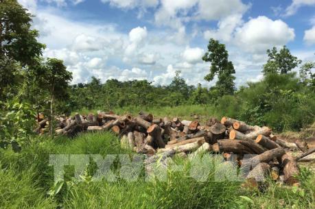 Phá rừng, lấn chiếm đất lâm nghiệp ở Tây Nguyên vẫn chưa được kiểm soát