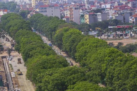 Hà Nội di chuyển, cắt tỉa hơn 1.200 cây xanh