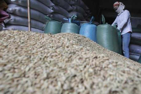 Chính phủ Hàn Quốc thu mua 370.000 tấn gạo