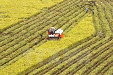 Thị trường nông sản tăng giá cuối tuần qua