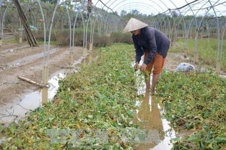 Đà Nẵng tập trung khôi phục sản xuất sau lũ
