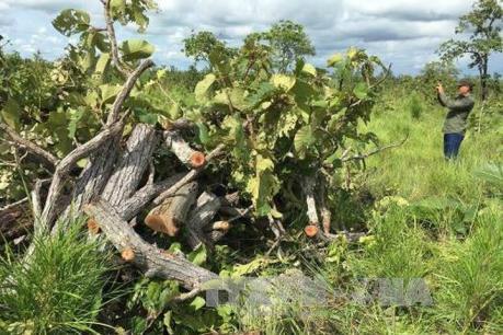 Xử lý dứt điểm việc lấn chiếm, tranh chấp đất đai ở các công ty nông, lâm nghiệp