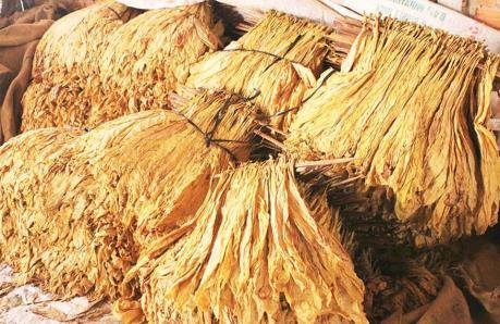 Lấy ý kiến dự thảo Thông tư quy định nhập khẩu thuốc lá nguyên liệu theo hạn ngạch