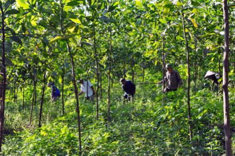 Đẩy mạnh việc sắp xếp, đổi mới các công ty nông, lâm nghiệp