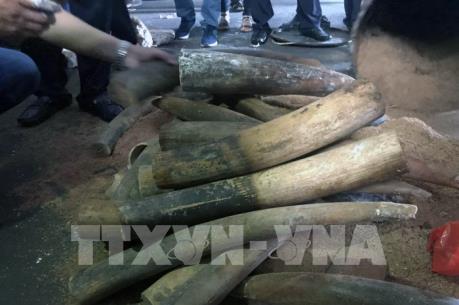 Lần đầu tiên phát hiện hơn 47 kg ngà voi vận chuyển qua đường bưu điện về Việt Nam