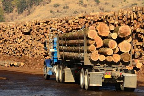 """Diễn biến mới nhất của """"cuộc chiến"""" gỗ xẻ mềm giữa Canada và Mỹ"""